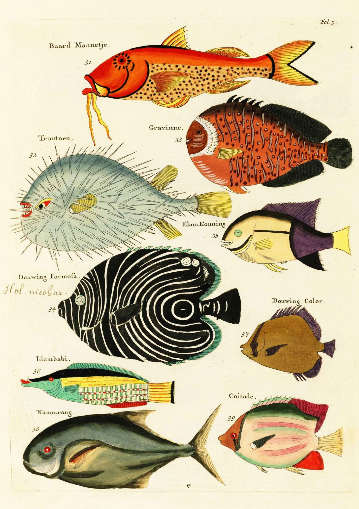 The Triangular Fish Print/Poster 4950 Marcus Elieser Bloch: Natural History